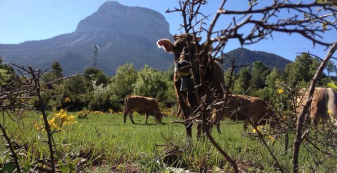 Fauna a los pies de la Peña Montañesa